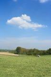 лето ландшафта стоковое изображение rf