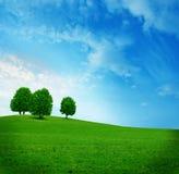 лето ландшафта Стоковые Изображения