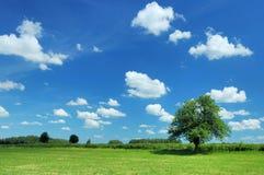 лето ландшафта Стоковые Изображения RF