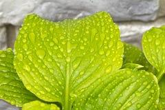 лето листьев Стоковая Фотография RF