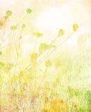 лето лужка предпосылки мягкое текстурировало Стоковые Фото