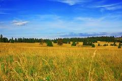 лето лужка Стоковое Изображение RF