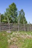 лето лужка Стоковая Фотография
