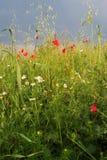 лето лужка Стоковые Фото