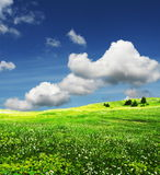 лето лужка Стоковое Фото