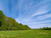 лето лужка Стоковое фото RF