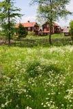 лето лужка Стоковые Фотографии RF