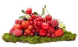 лето мха смешивания ягод Стоковое Изображение RF