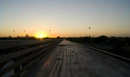 Лето на заходе солнца Стоковые Изображения