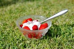 Лето на лужайке Стоковые Фото