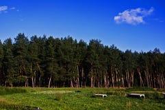 Лето неба солнечного дня стоковые фотографии rf