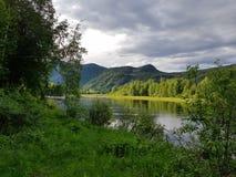 Лето озером стоковые изображения