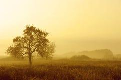 Лето оплакивая Стоковые Изображения RF