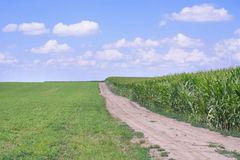 Лето дороги кукурузного поля Стоковые Фотографии RF