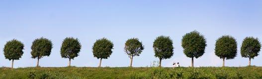 лето панорамы стоковое изображение rf