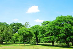 лето парка Стоковая Фотография