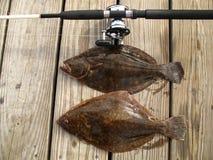 лето пар flounder Стоковая Фотография