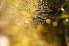 Лето паутины Стоковая Фотография