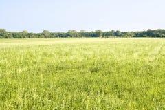 лето пейзажа Стоковые Изображения