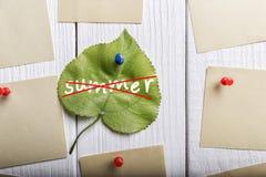 Лето пересеченное на зеленые лист Стоковая Фотография