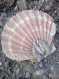 Лето песка моря земли раковины Стоковое фото RF