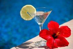 лето питья Стоковая Фотография