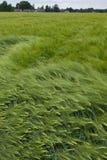 лето поля дня ячменя Стоковые Фотографии RF