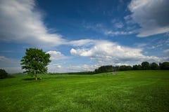 лето поля зеленое стоковые фото