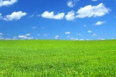 лето поля зеленое Стоковое Изображение