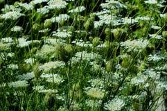 лето поля Стоковая Фотография