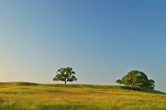 лето поля стоковые изображения rf
