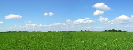 лето поля Стоковые Изображения