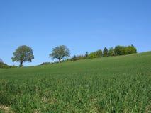 лето поля Стоковое фото RF