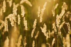 лето поля Стоковое Изображение