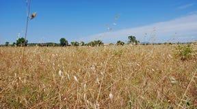 лето поля Стоковые Фото