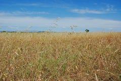 лето поля Стоковое Изображение RF