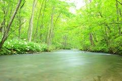 Лето потока Oirase Стоковые Фото