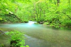 Лето потока Oirase Стоковые Изображения