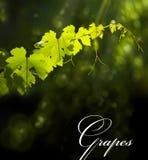 лето предпосылки естественное Стоковая Фотография RF