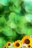 лето предпосылки Стоковые Фотографии RF