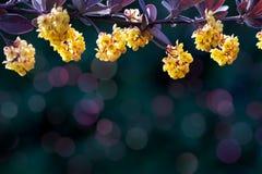 лето принципиальной схемы клеток птиц предпосылки флористическое вне их Красивые цветорасположения желтых цветков на фиолетовой и стоковая фотография rf
