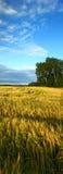 лето природы Стоковая Фотография