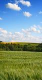 лето природы стоковая фотография rf