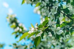 Лето природы влюбленности красочное Стоковые Изображения