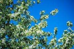 Лето природы влюбленности красочное Стоковая Фотография RF