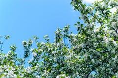 Лето природы влюбленности красочное Стоковая Фотография
