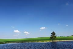 лето пруда сельской местности Стоковые Изображения RF