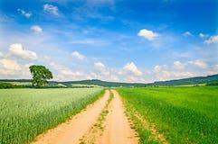 лето путя поля Стоковые Изображения
