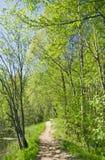 лето путя пущи Стоковое Фото