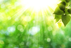 лето пущи дня красотки Стоковое фото RF